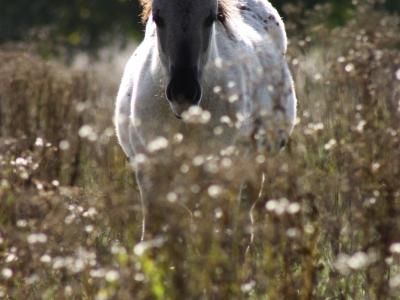 Schattige pony