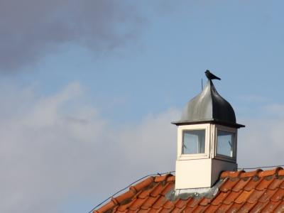 Vogel op schoorsteen