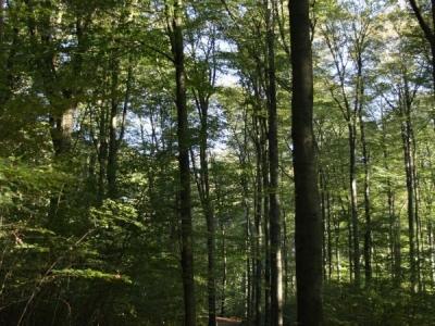 Sonsbeek-Park-Arnhem-16